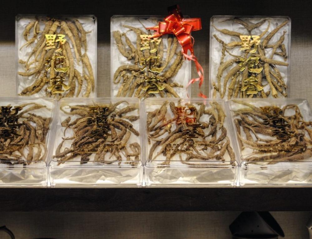 Ginseng, more than a herb